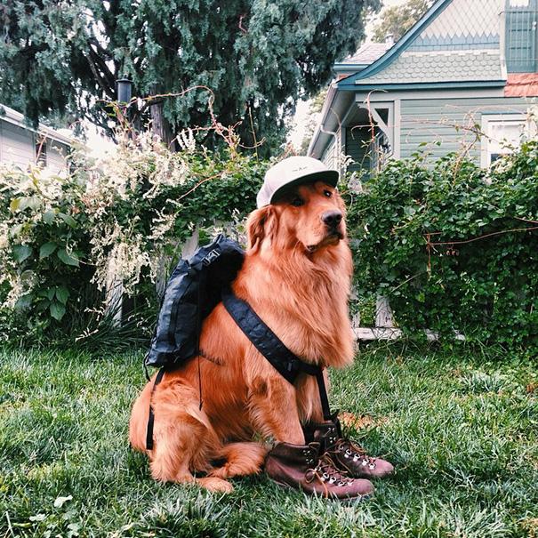perro-aspen-viajes-aventura-hunter-lawrence-6
