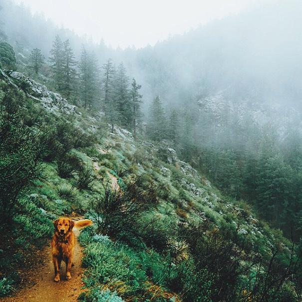 perro-aspen-viajes-aventura-hunter-lawrence-7