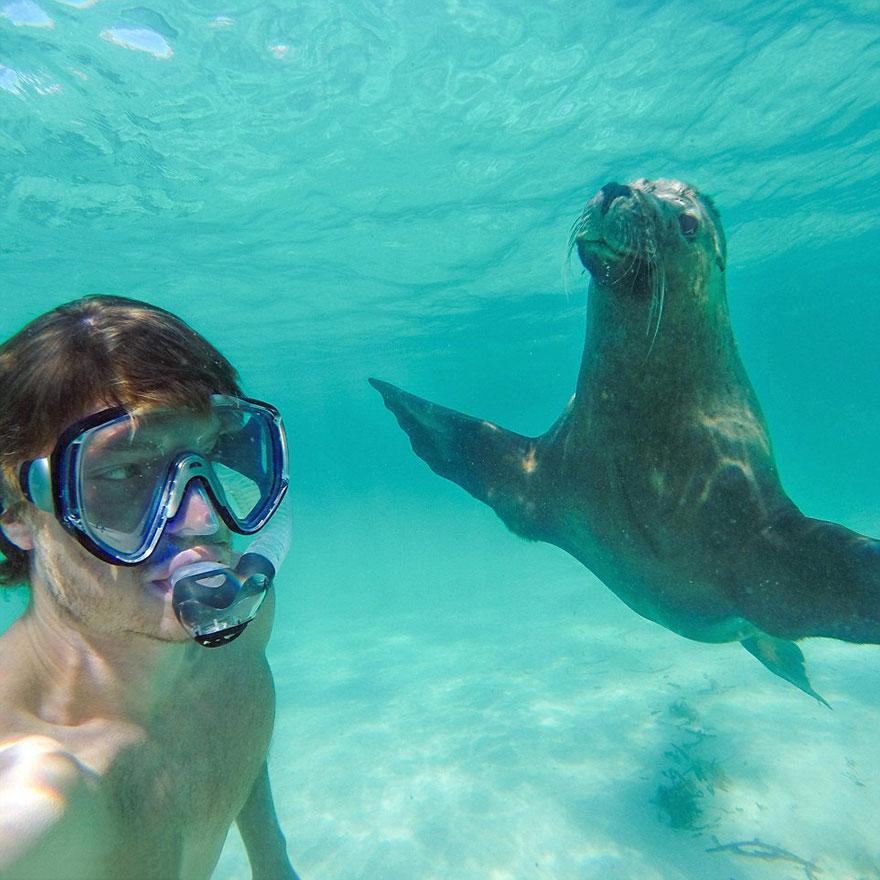 experto-selfies-animales-allan-dixon-4