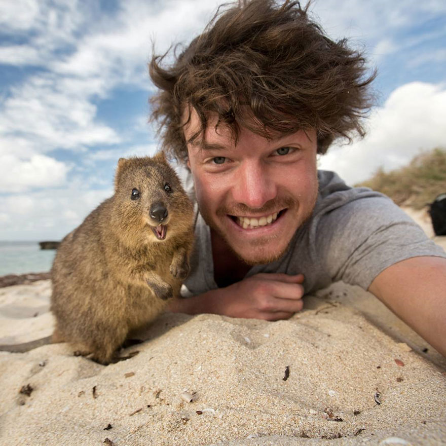 experto-selfies-animales-allan-dixon-7