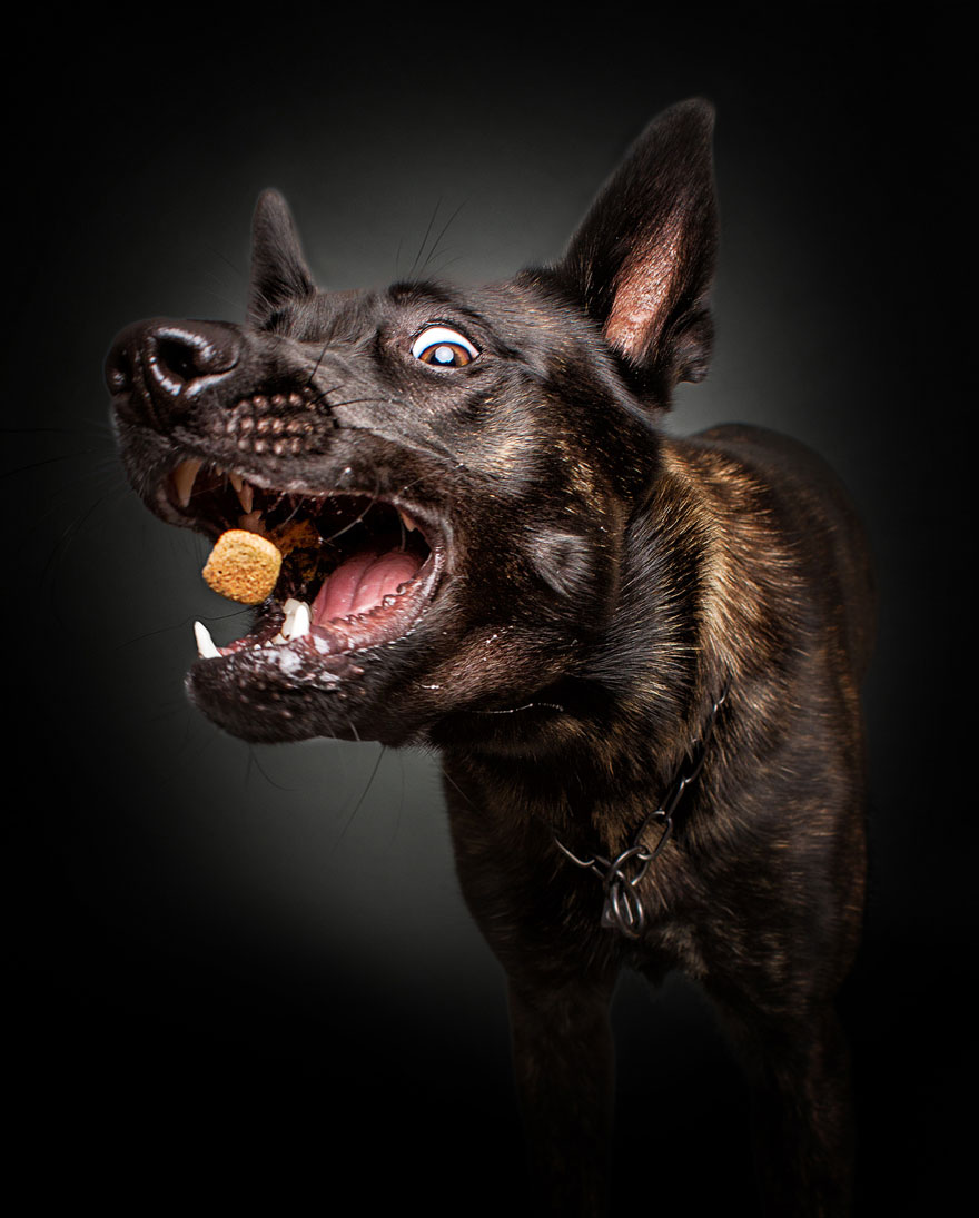 fotos-perros-expresiones-faciales-comida-christian-vieler-1