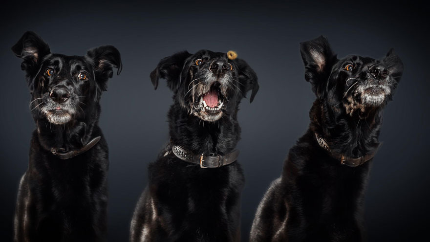 fotos-perros-expresiones-faciales-comida-christian-vieler-11