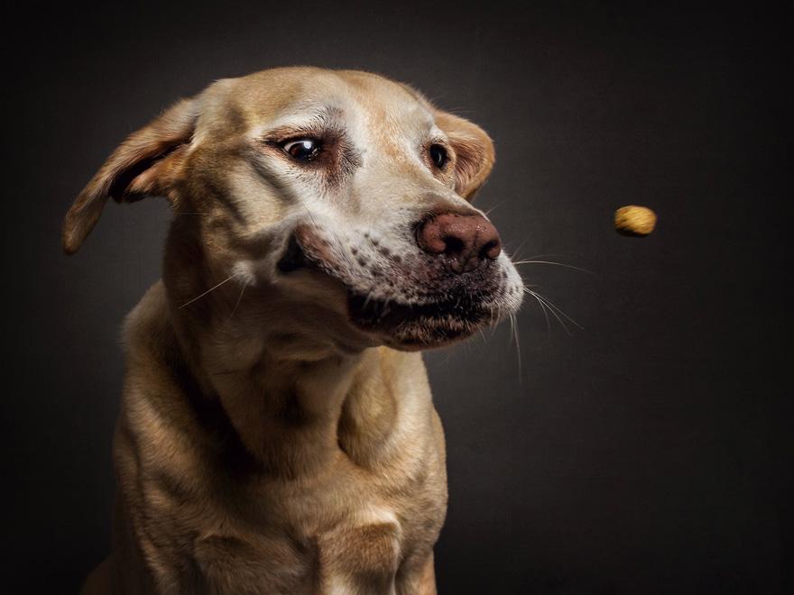 fotos-perros-expresiones-faciales-comida-christian-vieler-4