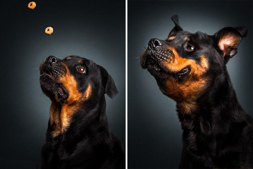 fotos-perros-expresiones-faciales-comida-christian-vieler-5