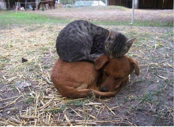 gatos-acostados-sobre-perros-02