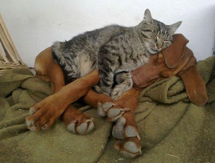 gatos-acostados-sobre-perros-05
