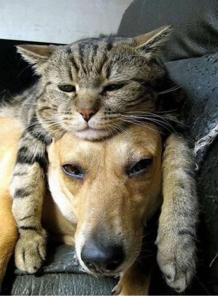 gatos-acostados-sobre-perros-08