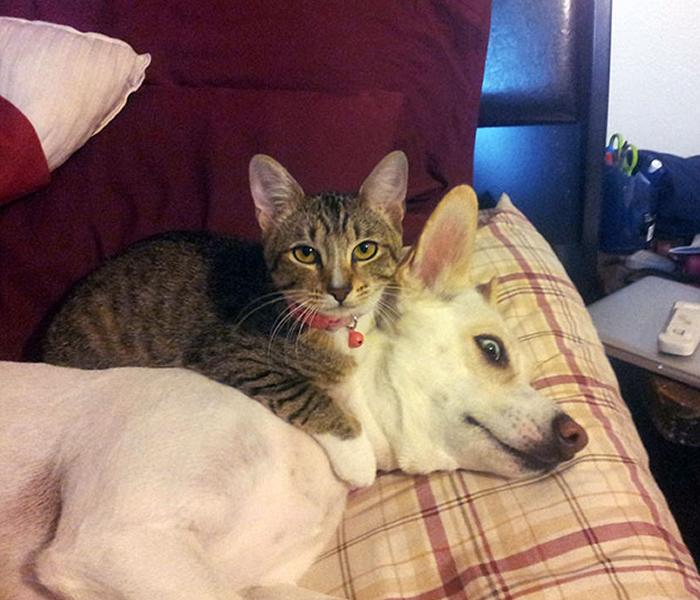 gatos-acostados-sobre-perros-09