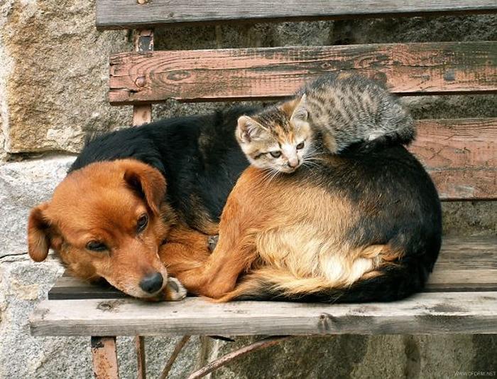 gatos-acostados-sobre-perros-14