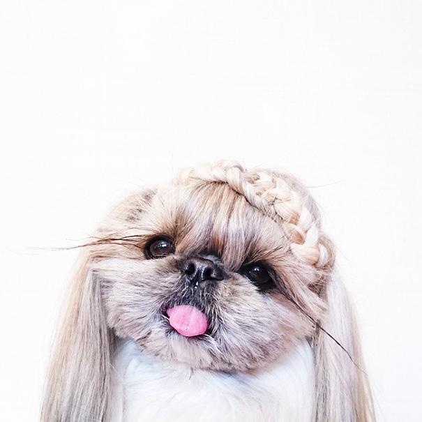 perro-kuma-peinados-diarios-instagram-moemn-10