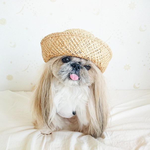 perro-kuma-peinados-diarios-instagram-moemn-11