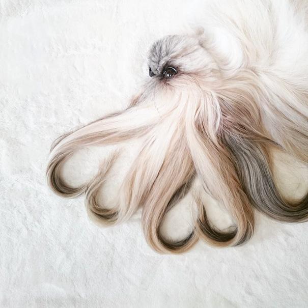 perro-kuma-peinados-diarios-instagram-moemn-12