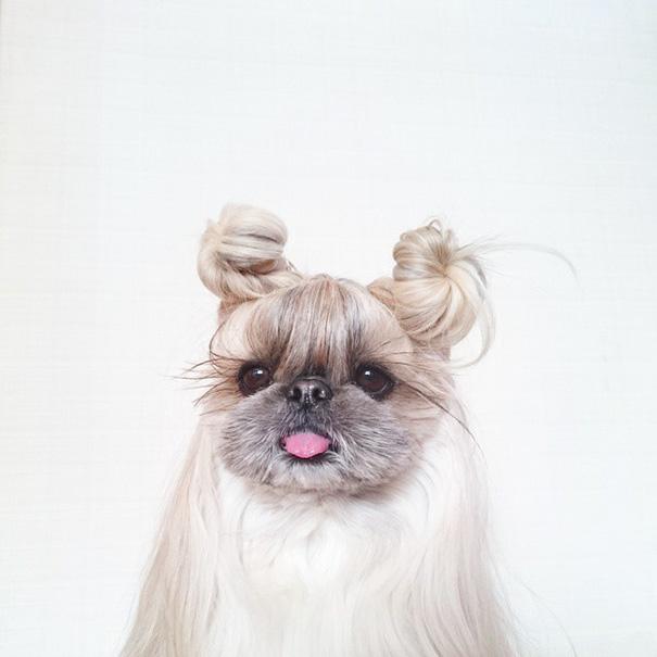 perro-kuma-peinados-diarios-instagram-moemn-13