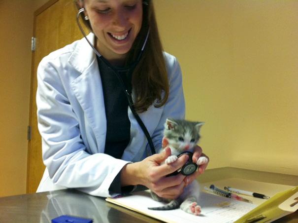 ventajas-trabajar-animales-veterinaria-15