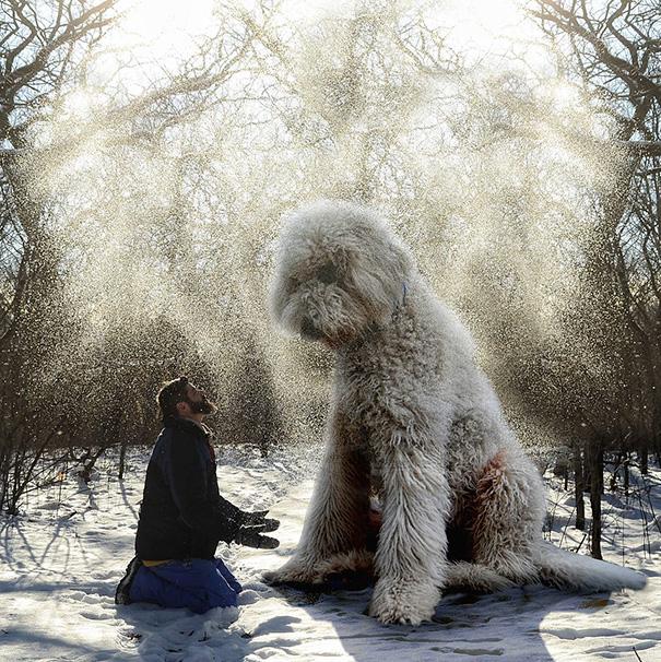 aventuras-juji-perro-gigante-photoshop-christopher-cline-1