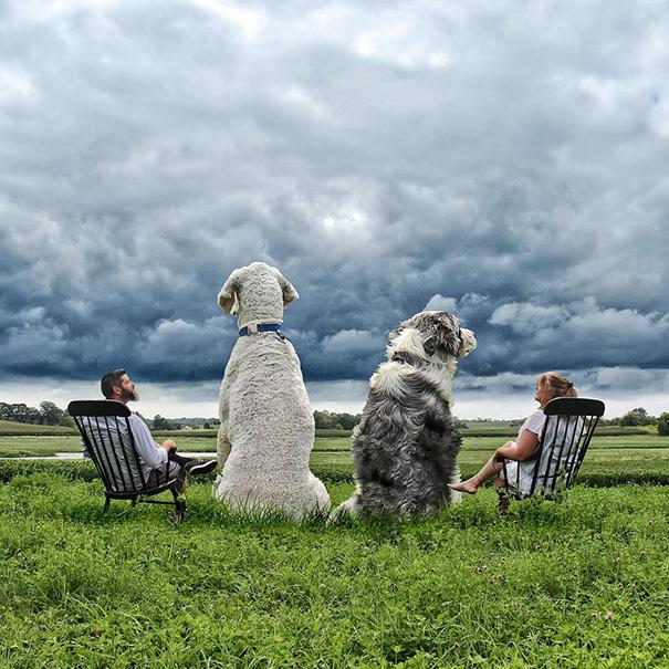 aventuras-juji-perro-gigante-photoshop-christopher-cline-4