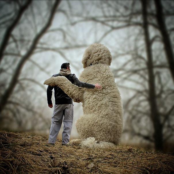 aventuras-juji-perro-gigante-photoshop-christopher-cline-8