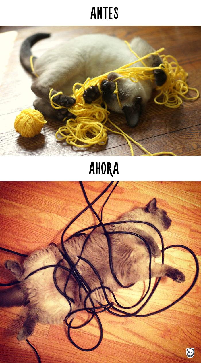 antes-ahora-gatos-tecnologia-3