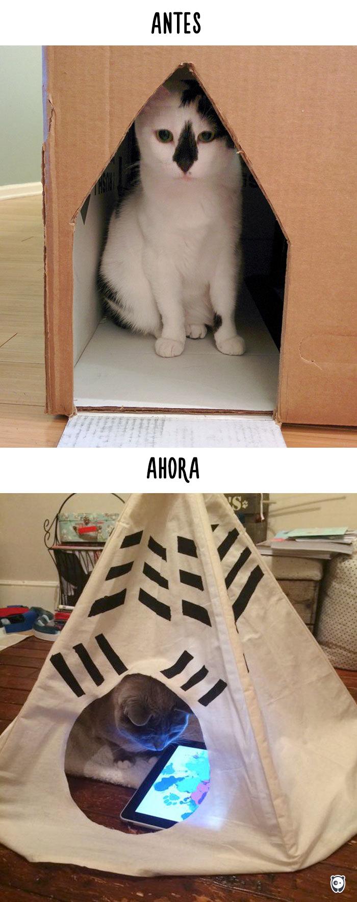 antes-ahora-gatos-tecnologia-8