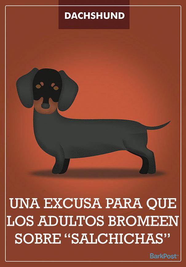 ilustraciones-eslogan-razas-perros-7
