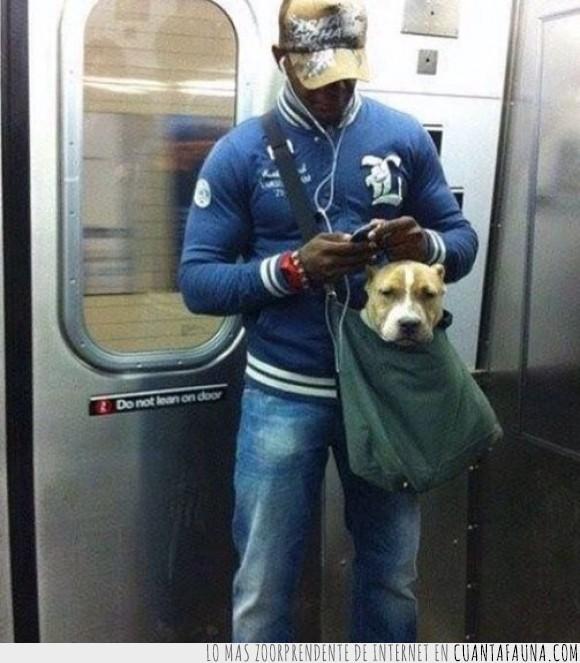 CF_46216_nueva_york_el_metro_prohibe_perros_a_menos_que_puedan_viajar_en_una_bolsa_pequena