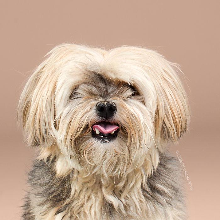 fotos-perros-antes-despues-corte-pelo-grace-chon-14
