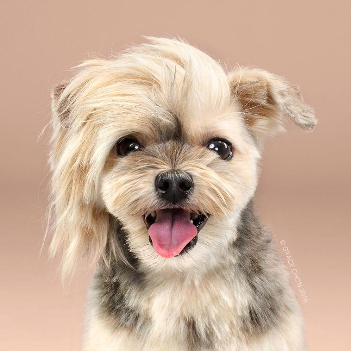 fotos-perros-antes-despues-corte-pelo-grace-chon-15