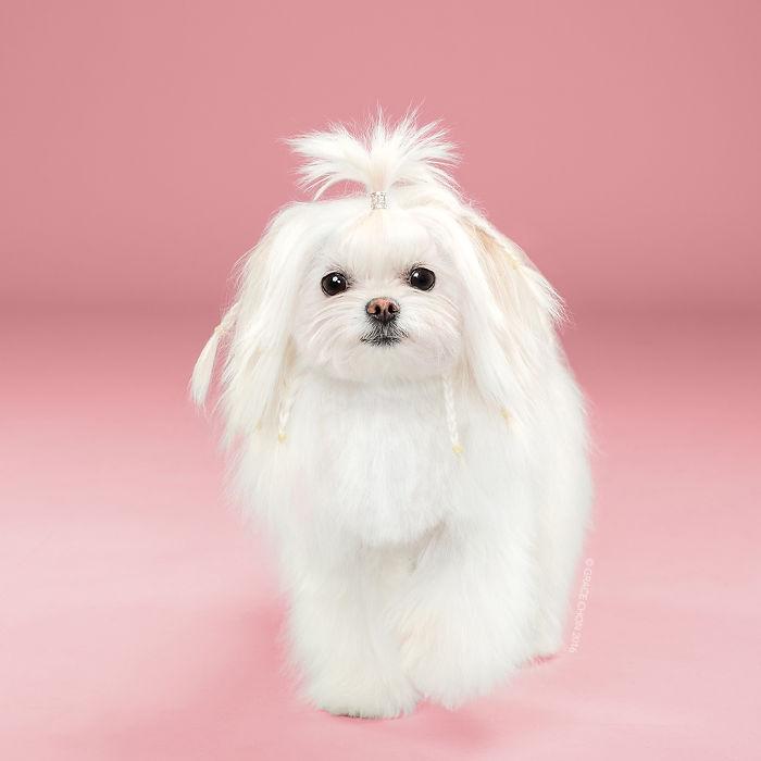 fotos-perros-antes-despues-corte-pelo-grace-chon-2