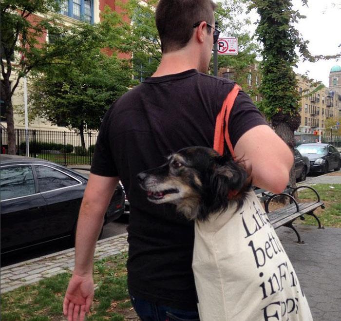 perros-grandes-bolsos-metro-nueva-york-3