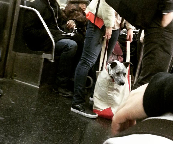 perros-grandes-bolsos-metro-nueva-york-4