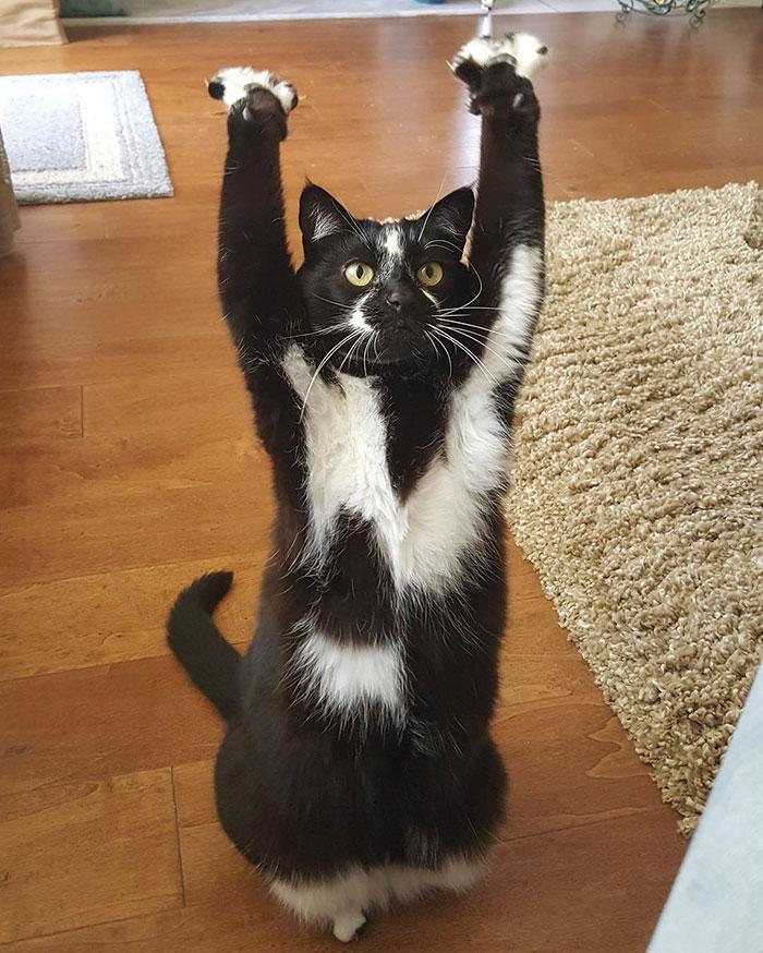 gato-manos-arriba-keys-10