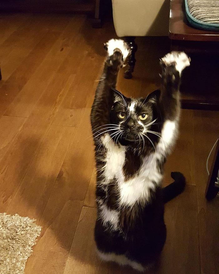 gato-manos-arriba-keys-3