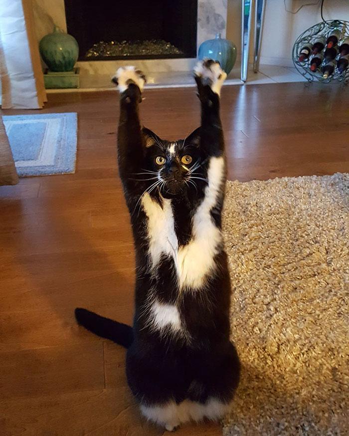 gato-manos-arriba-keys-6