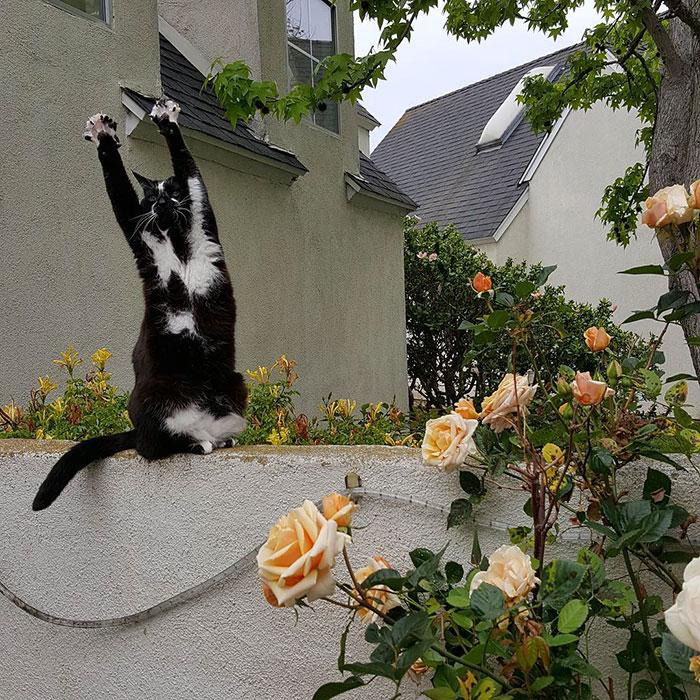 gato-manos-arriba-keys-7