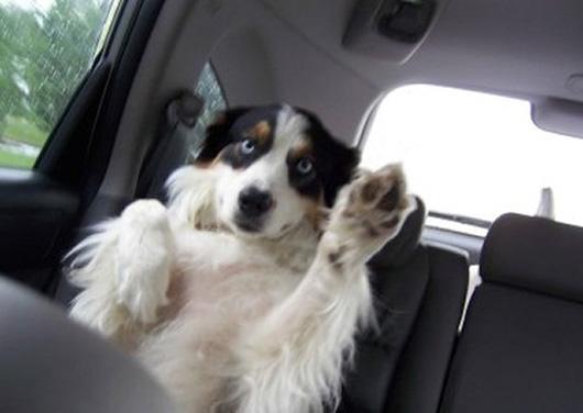perro-saludando