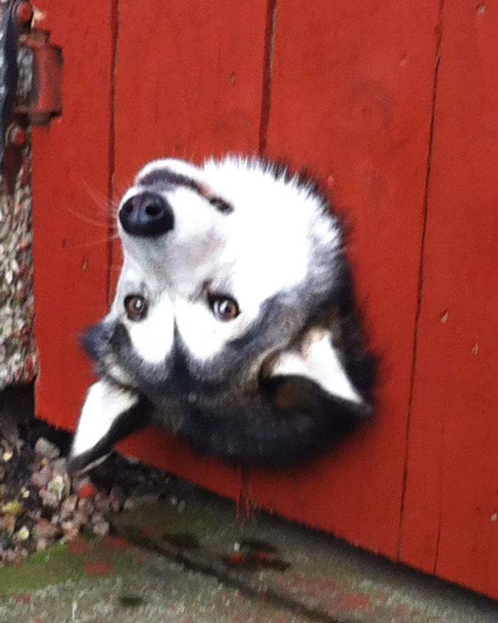 perros-asomando-cabeza-saludar-1