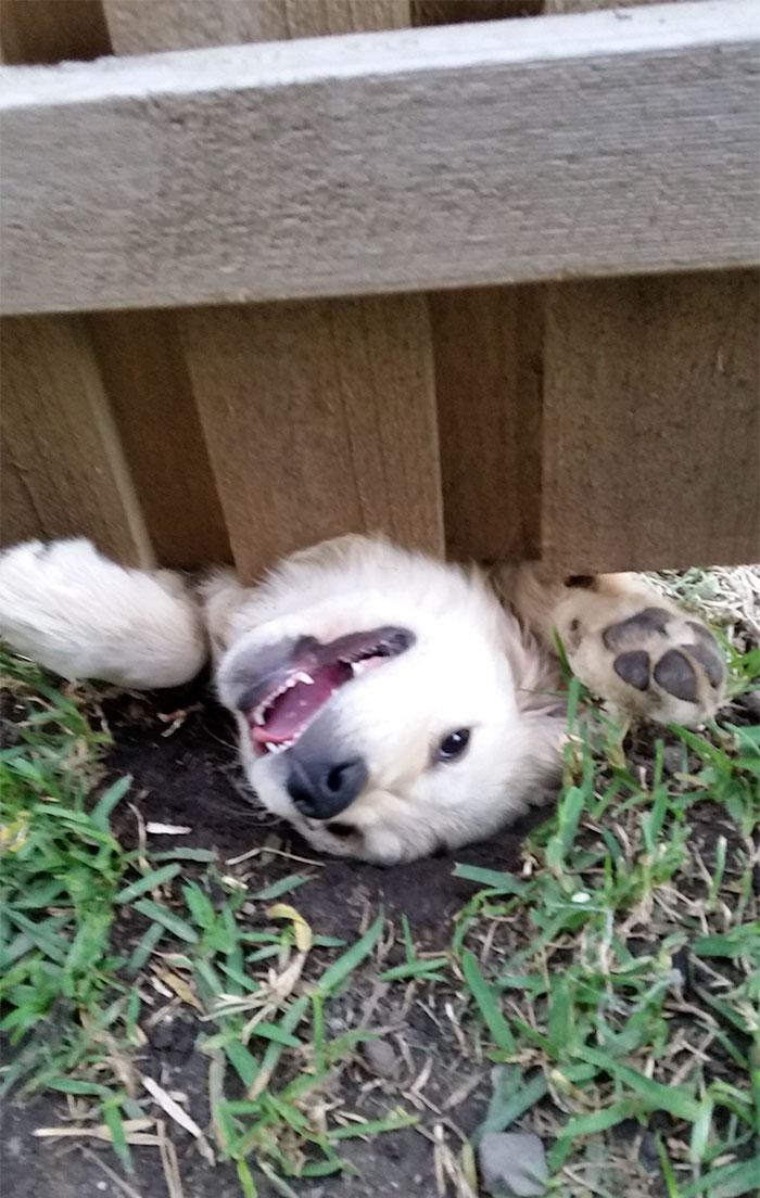 perros-asomando-cabeza-saludar-4