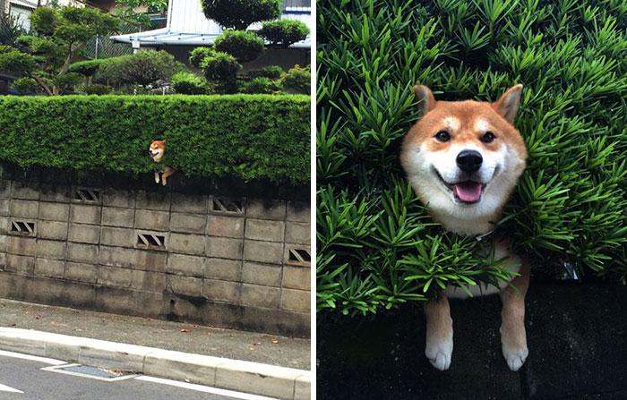 perros-asomando-cabeza-saludar-8